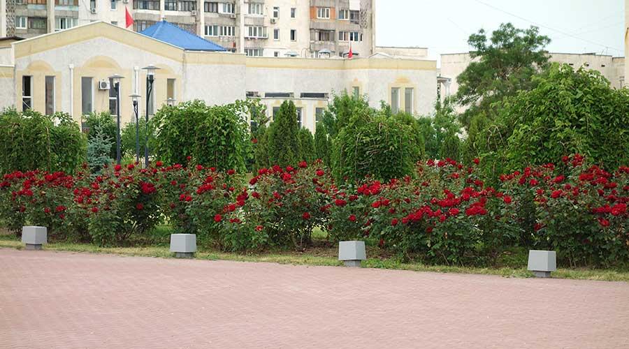 Красные розы на площади Евпатория