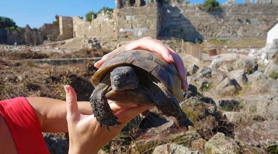 затягивать процесс фото турция сиде остров черепах этот